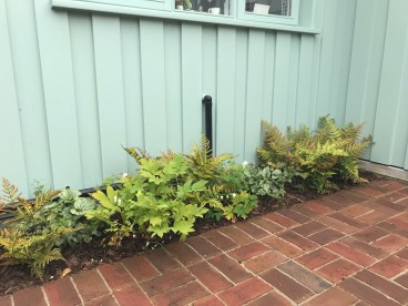 A simple planting scheme, relying on foliage textures to provide interest, will be easy for the client to maintain.